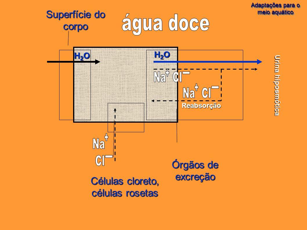 água doce Superfície do corpo Órgãos de excreção Células cloreto,