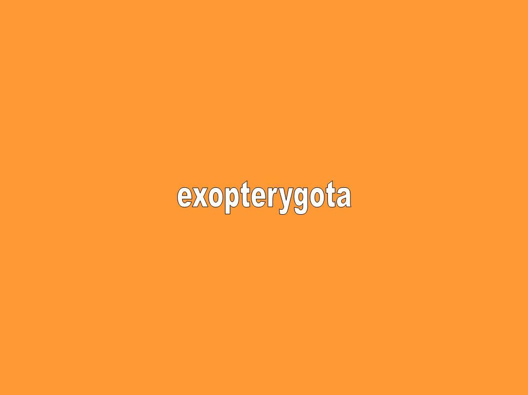 exopterygota