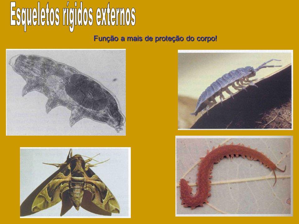 Esqueletos rígidos externos