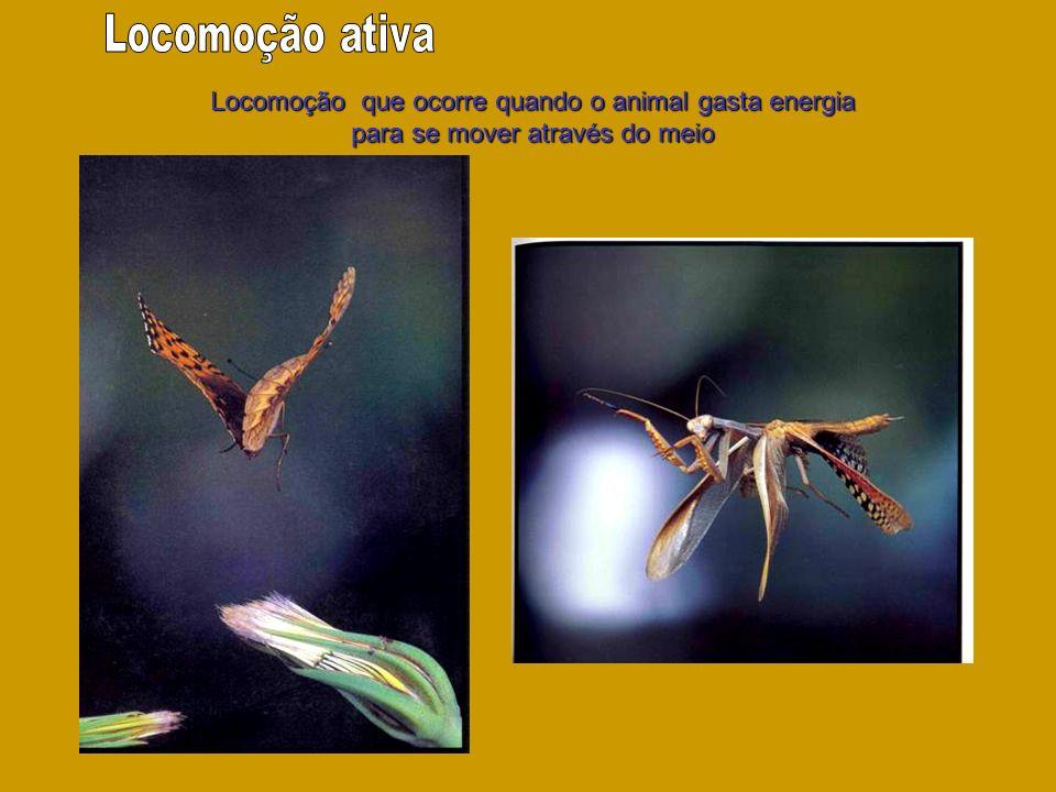 Locomoção ativa Locomoção que ocorre quando o animal gasta energia para se mover através do meio