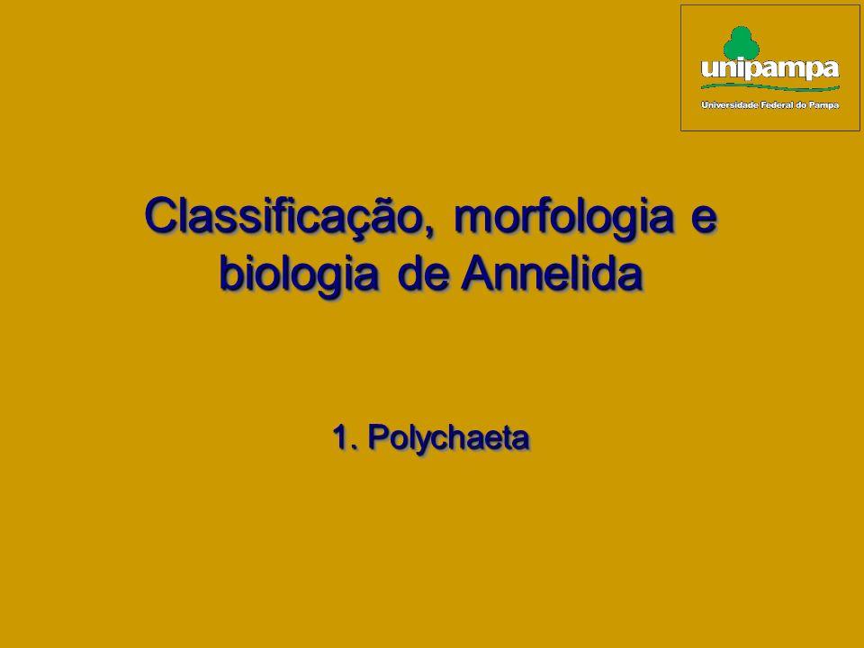 Classificação, morfologia e