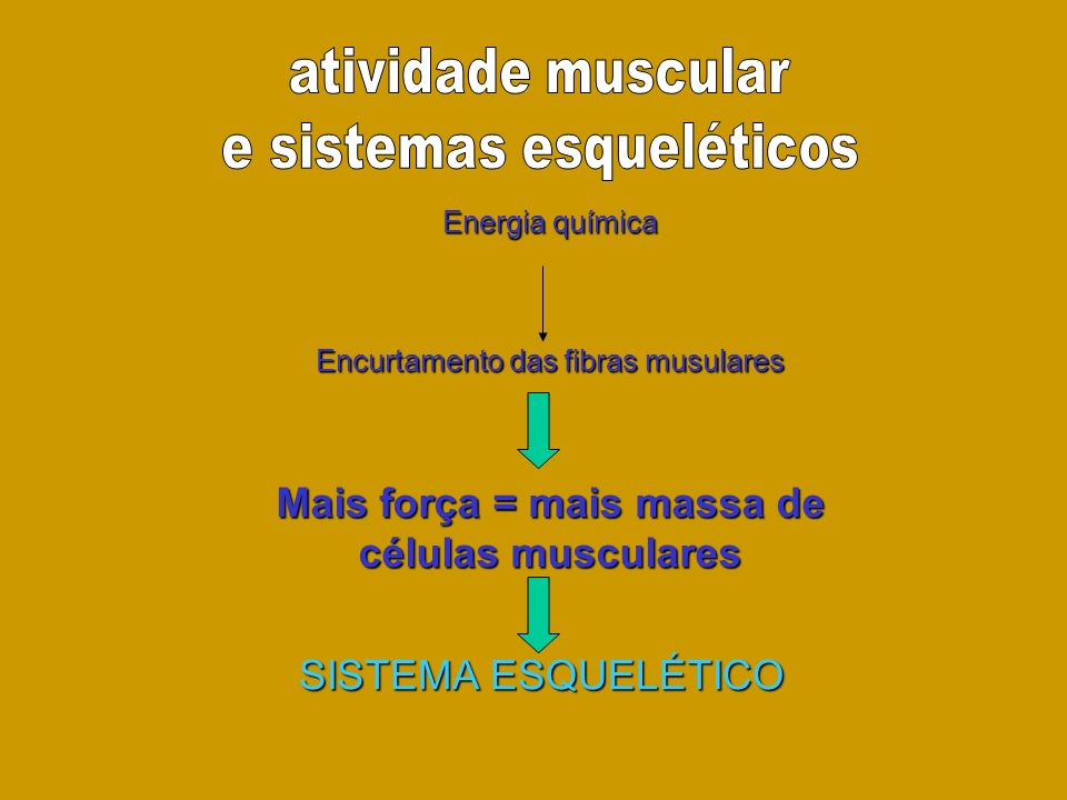 Mais força = mais massa de células musculares