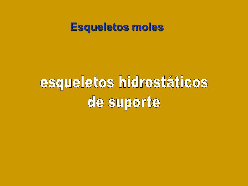 esqueletos hidrostáticos