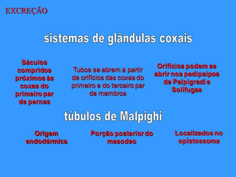 sistemas de glândulas coxais