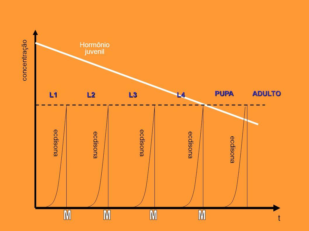 t Hormônio juvenil concentração L1 L2 L3 L4 PUPA ADULTO ecdisona