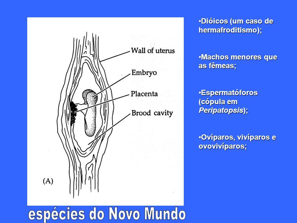 espécies do Novo Mundo Dióicos (um caso de hermafroditismo);