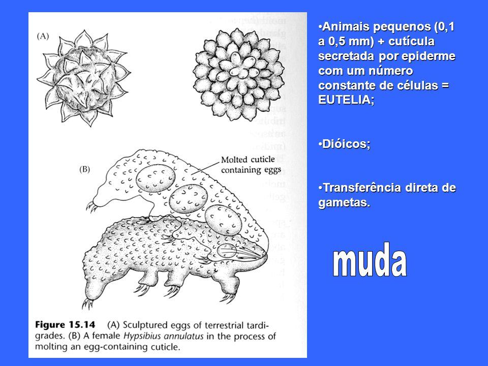 Animais pequenos (0,1 a 0,5 mm) + cutícula secretada por epiderme com um número constante de células = EUTELIA;