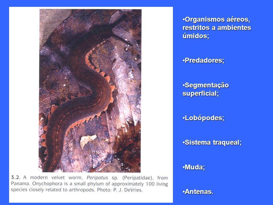 Organismos aéreos, restritos a ambientes úmidos;