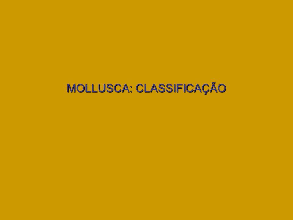 MOLLUSCA: CLASSIFICAÇÃO