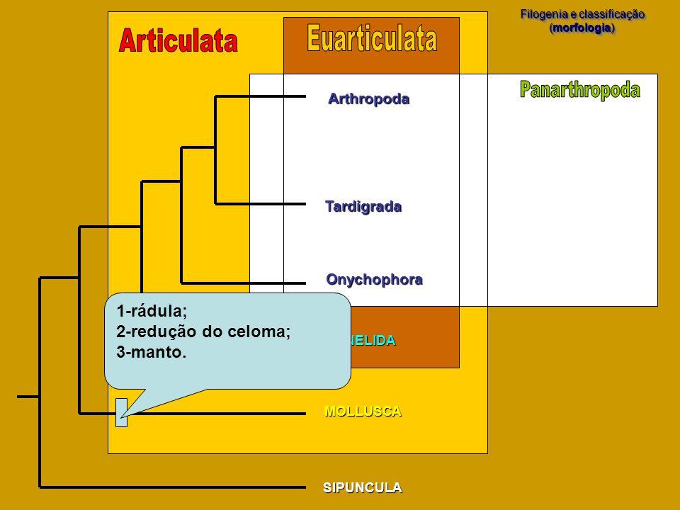 Filogenia e classificação