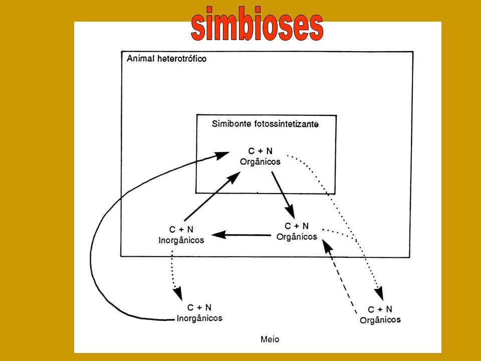 simbioses
