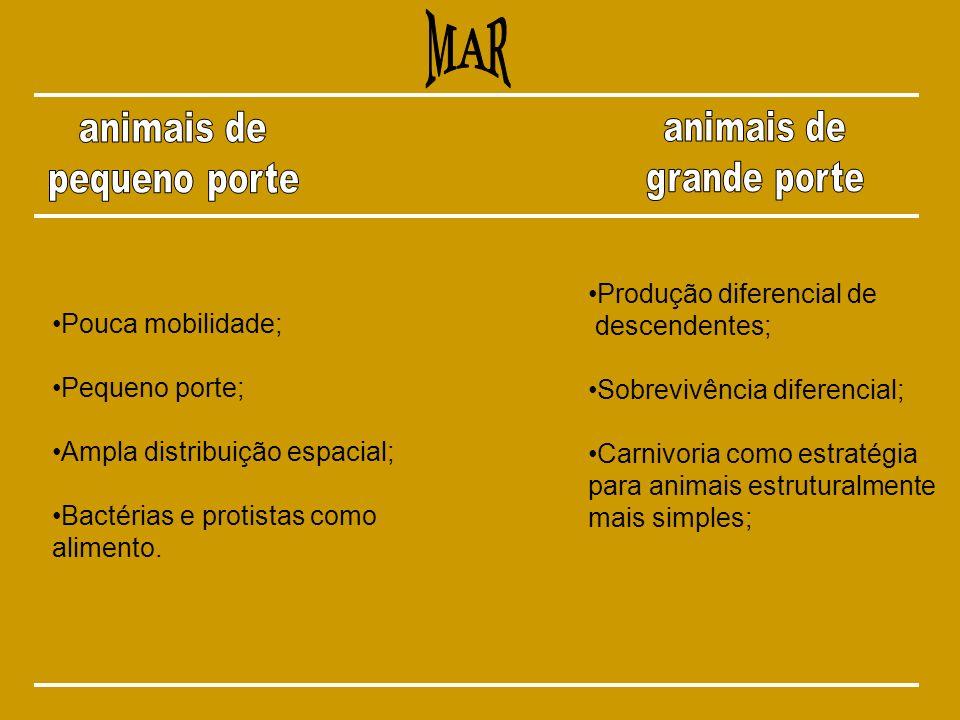 MAR animais de animais de pequeno porte grande porte
