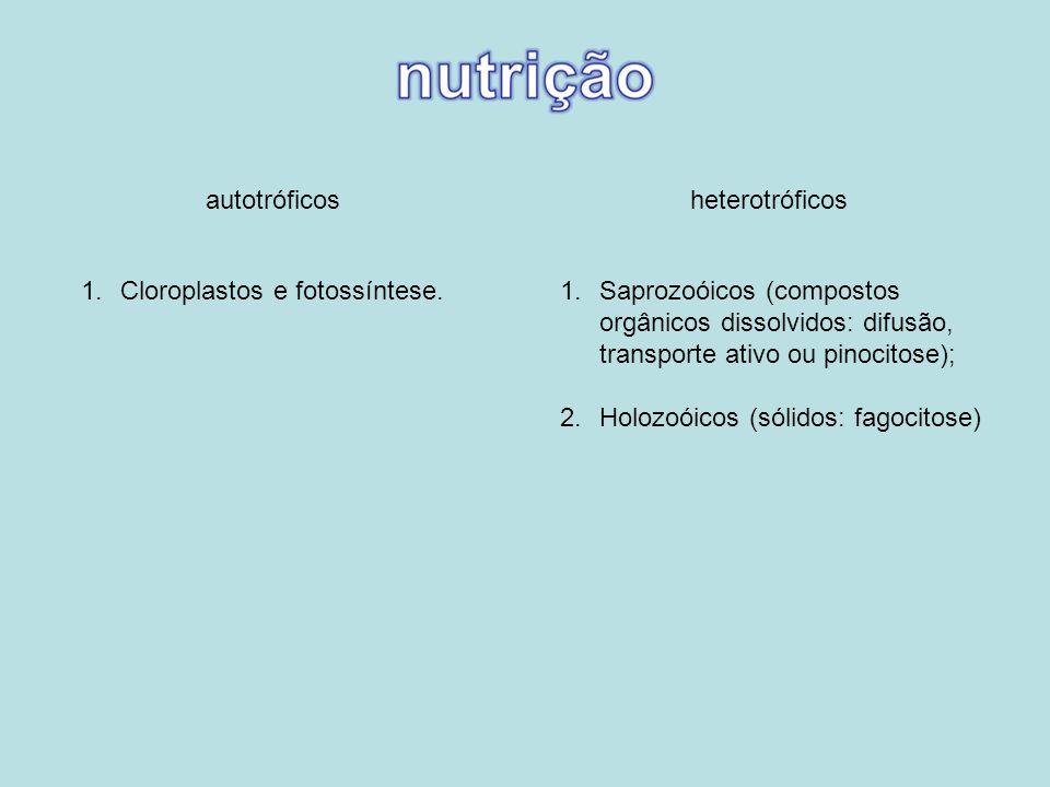 autotróficosheterotróficos. Cloroplastos e fotossíntese. Saprozoóicos (compostos orgânicos dissolvidos: difusão, transporte ativo ou pinocitose);