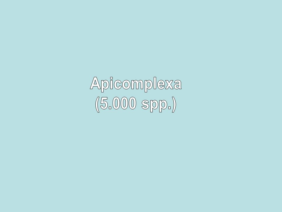 Apicomplexa (5.000 spp.)