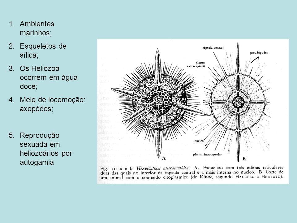 Ambientes marinhos; Esqueletos de sílica; Os Heliozoa ocorrem em água doce; Meio de locomoção: axopódes;