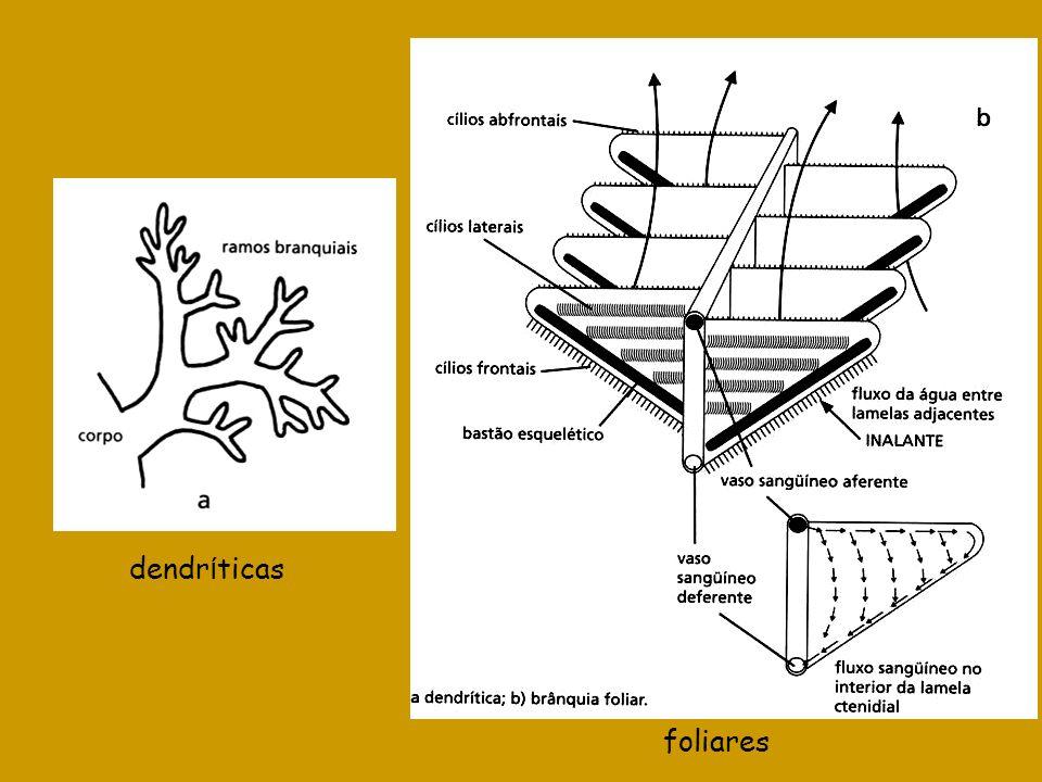 dendríticas foliares