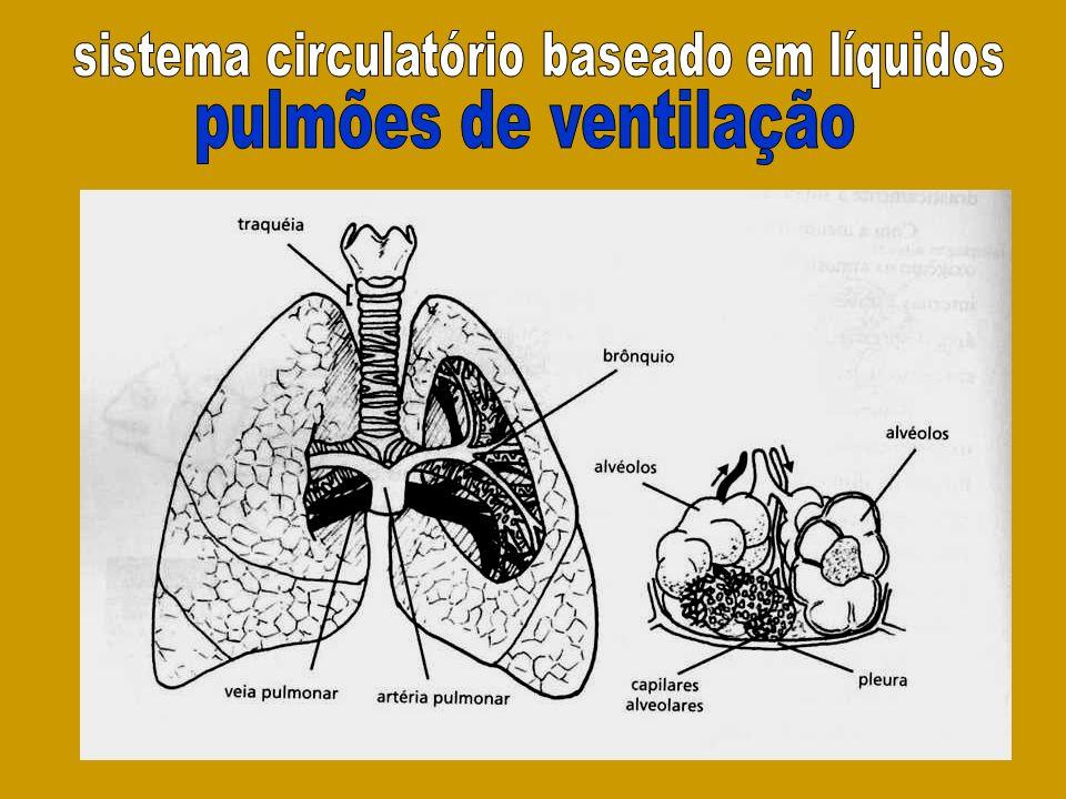 sistema circulatório baseado em líquidos
