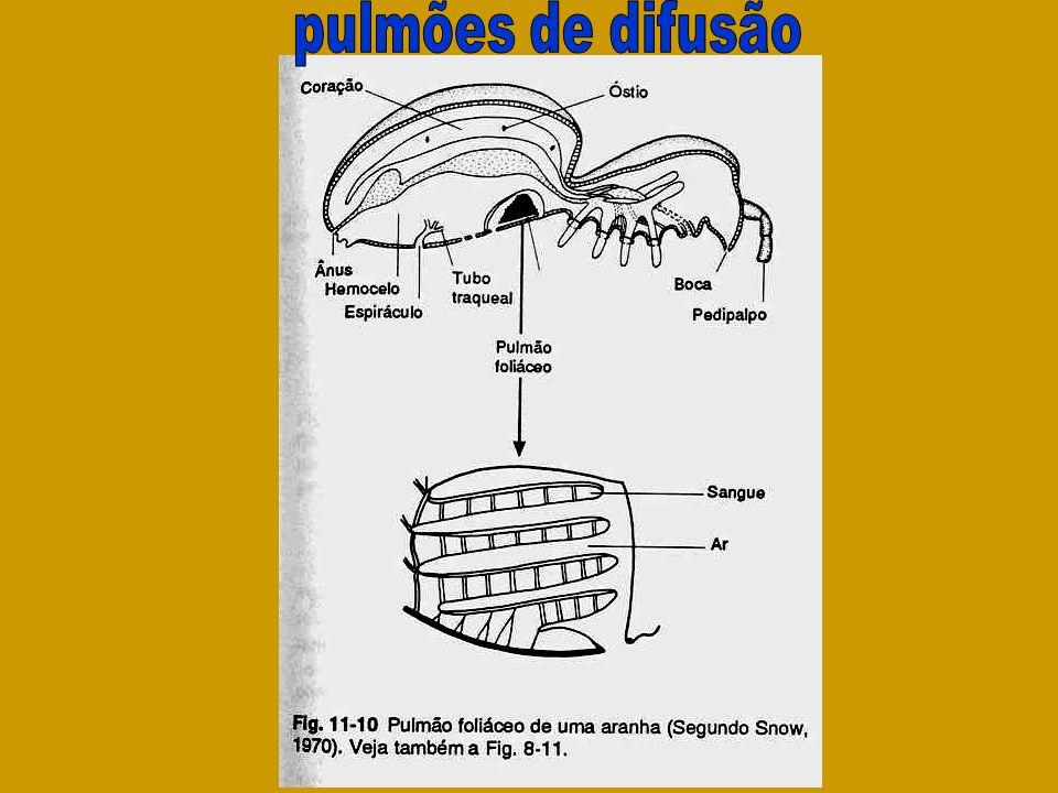 pulmões de difusão