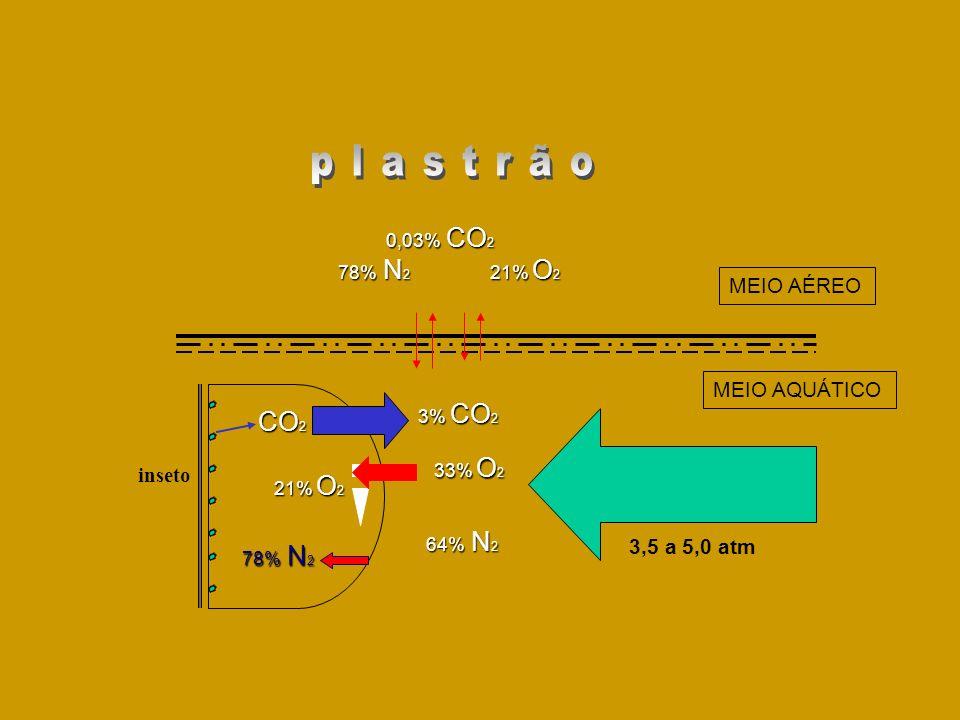 plastrão CO2 MEIO AÉREO MEIO AQUÁTICO inseto 3,5 a 5,0 atm 0,03% CO2