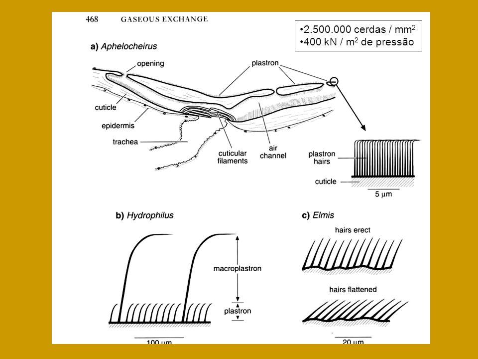2.500.000 cerdas / mm2 400 kN / m2 de pressão