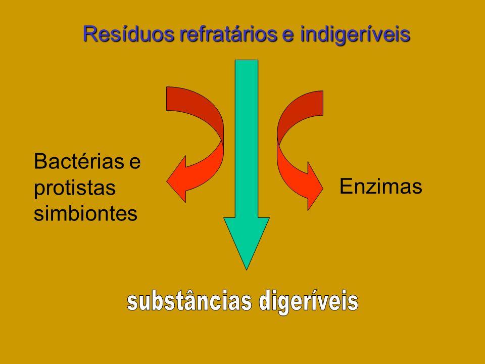 substâncias digeríveis