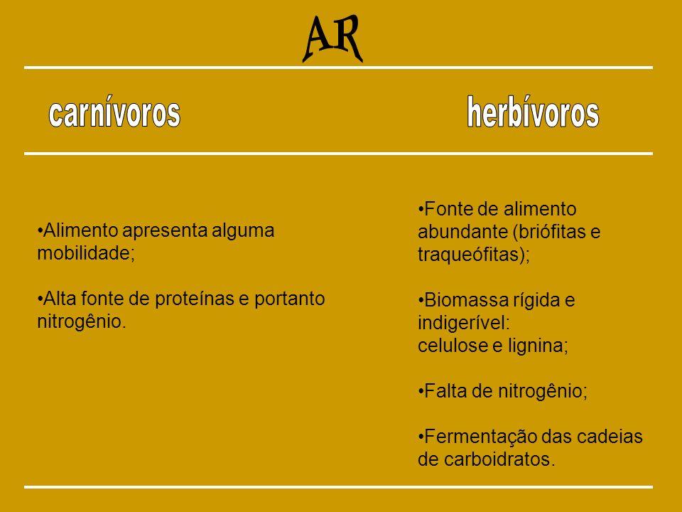 AR carnívoros herbívoros