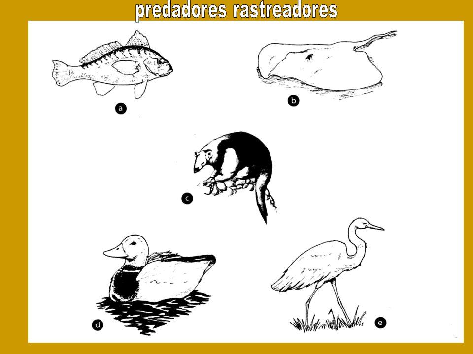 predadores rastreadores