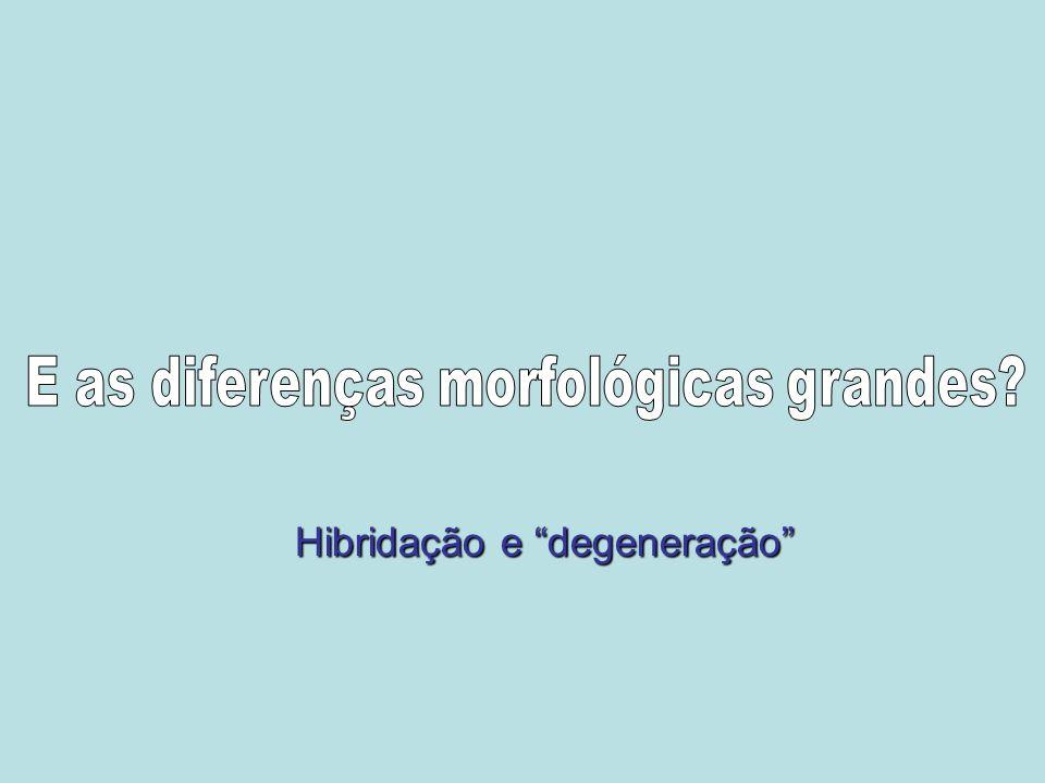 E as diferenças morfológicas grandes