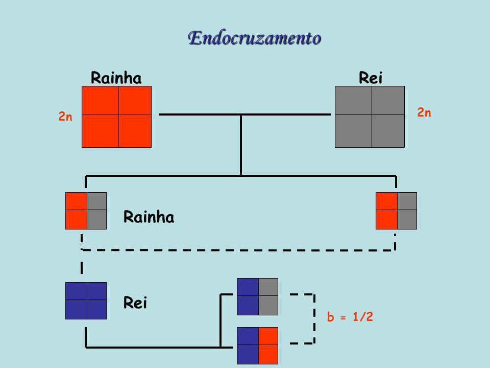 Endocruzamento Rainha Rei 2n 2n Rainha Rei b = 1/2