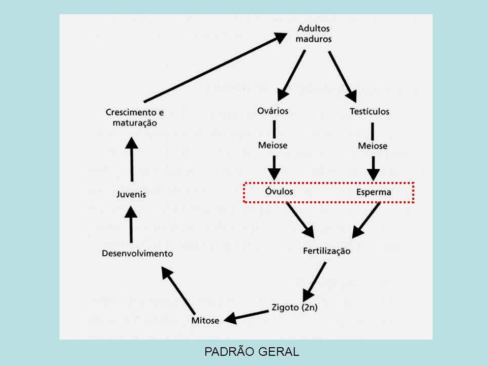 PADRÃO GERAL