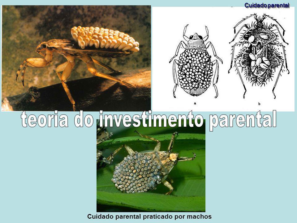 teoria do investimento parental