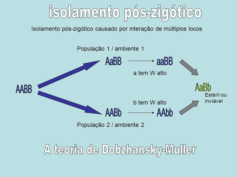 isolamento pós-zigótico