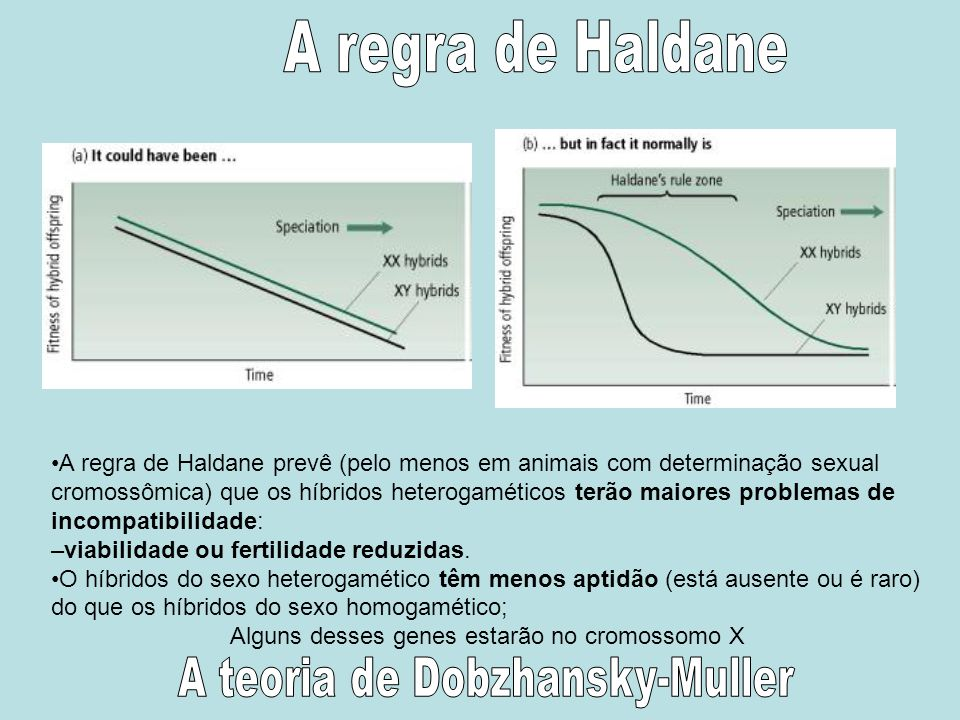 A regra de Haldane A teoria de Dobzhansky-Muller