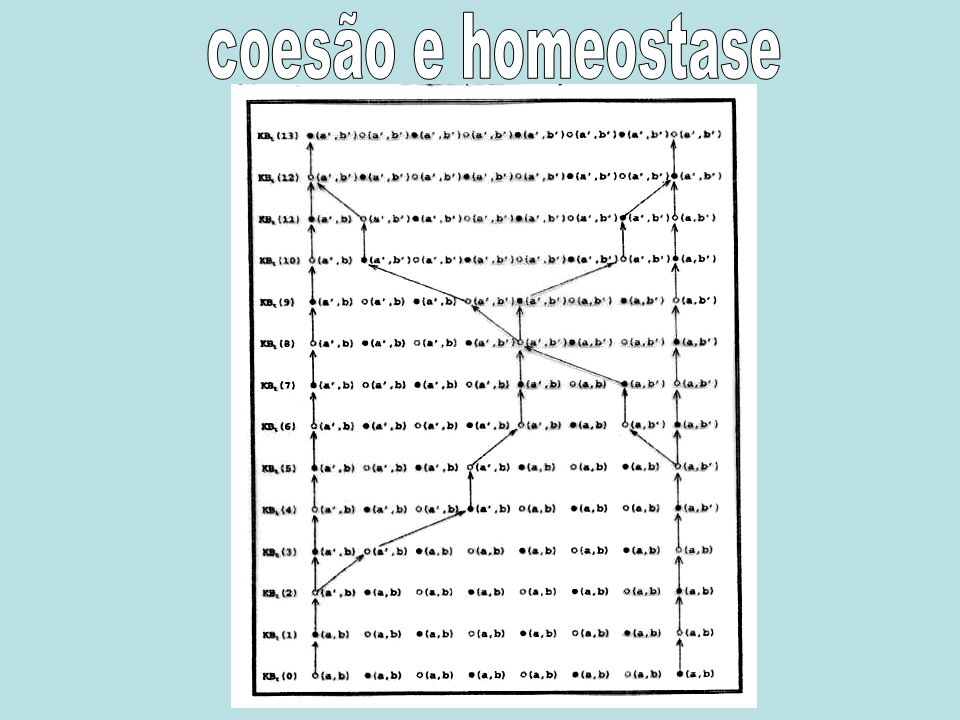 coesão e homeostase