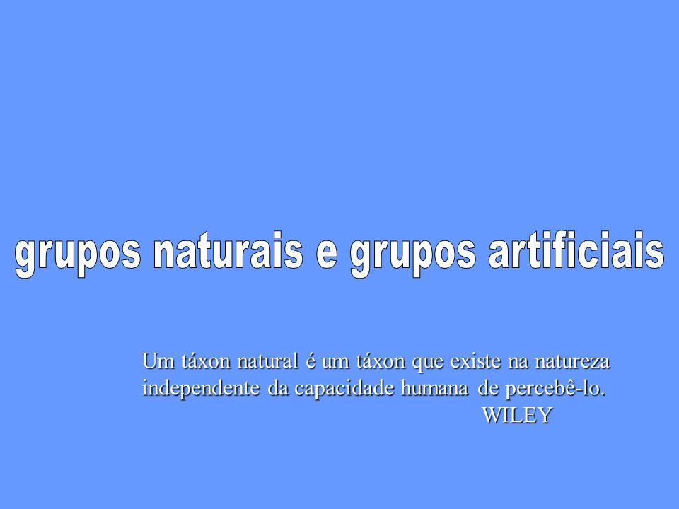 grupos naturais e grupos artificiais