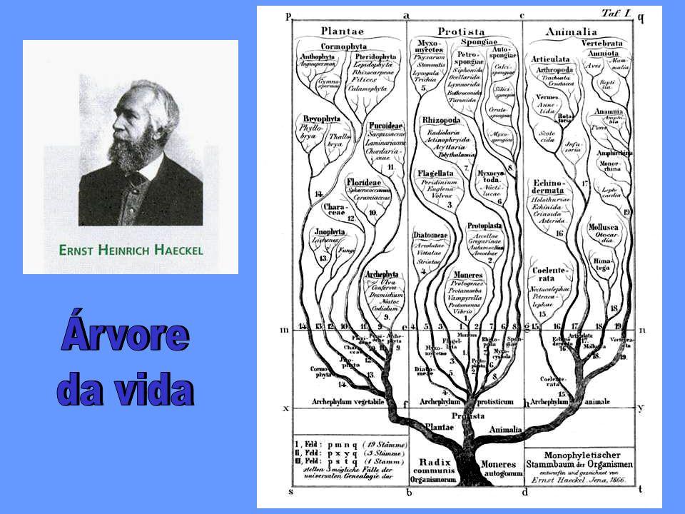 Árvore da vida Árvore da vida