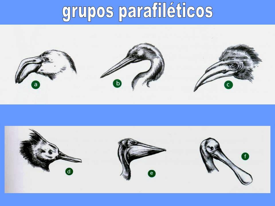 grupos parafiléticos