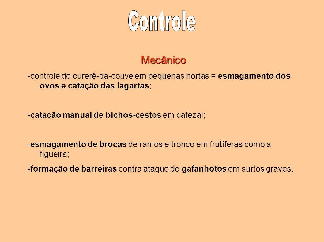 Controle Mecânico. -controle do curerê-da-couve em pequenas hortas = esmagamento dos ovos e catação das lagartas;
