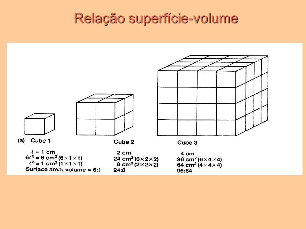 Relação superfície-volume