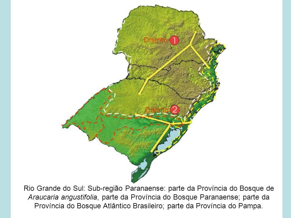 Rio Grande do Sul: Sub-região Paranaense: parte da Província do Bosque de Araucaria angustifolia, parte da Província do Bosque Paranaense; parte da Província do Bosque Atlântico Brasileiro; parte da Província do Pampa.
