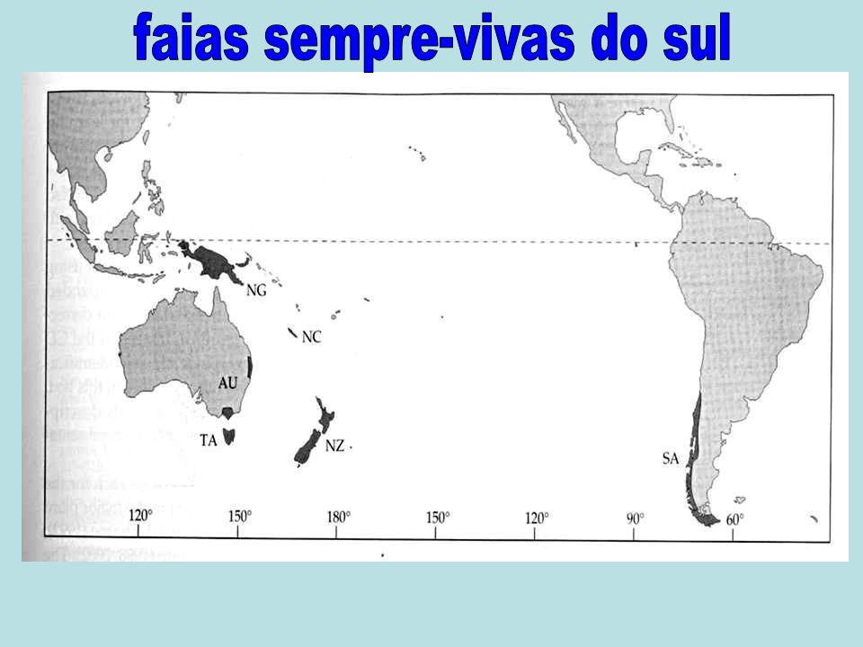 faias sempre-vivas do sul