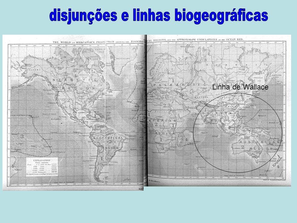 disjunções e linhas biogeográficas