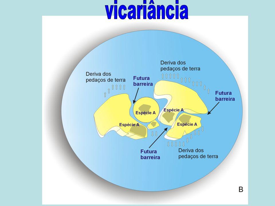 vicariância