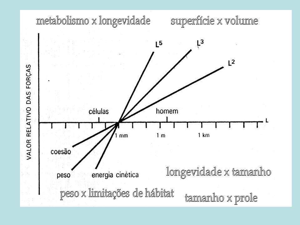 metabolismo x longevidade superfície x volume