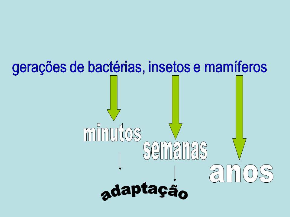 gerações de bactérias, insetos e mamíferos