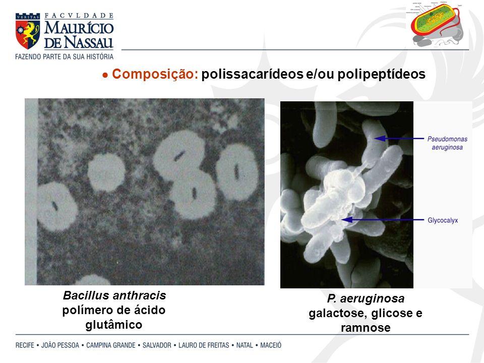  Composição: polissacarídeos e/ou polipeptídeos