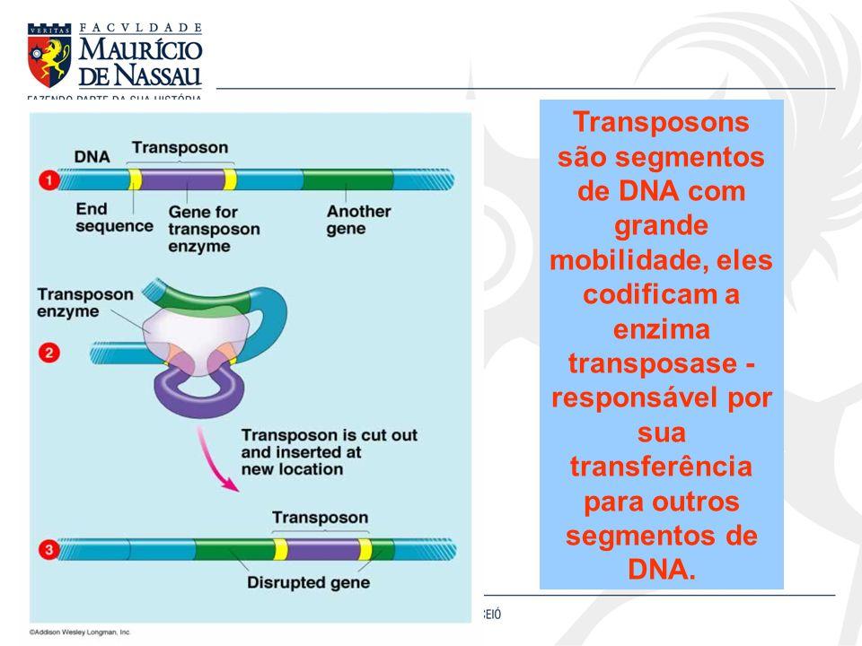 Transposons são segmentos de DNA com grande mobilidade, eles codificam a enzima transposase - responsável por sua transferência para outros segmentos de DNA.