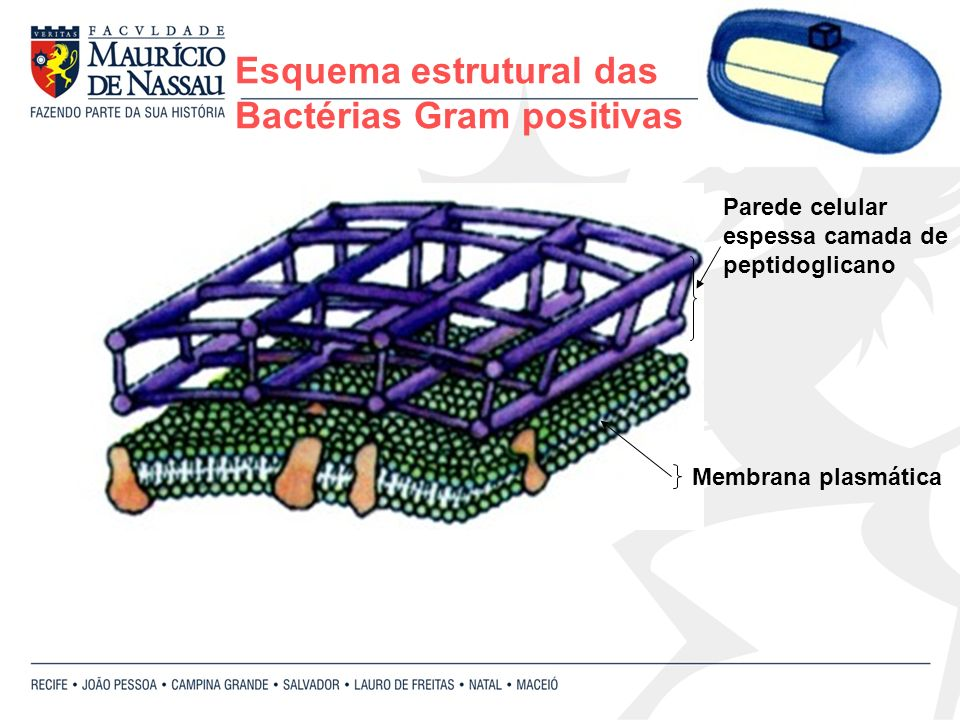 Esquema estrutural das Bactérias Gram positivas