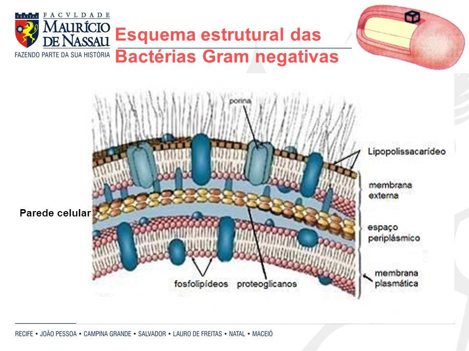 Esquema estrutural das Bactérias Gram negativas