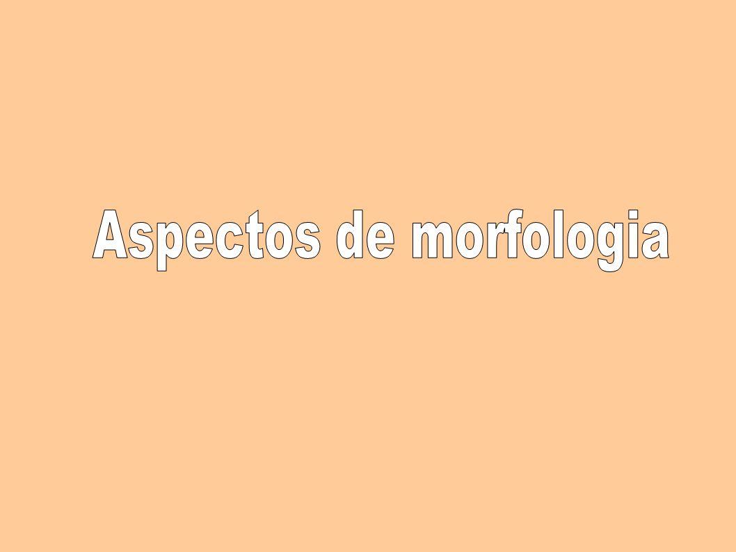 Aspectos de morfologia